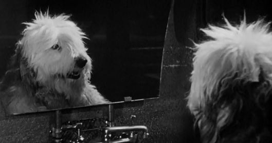 """""""Who is that dog I see, staring straight back at me? Why is my reflection someone I don't know?"""""""